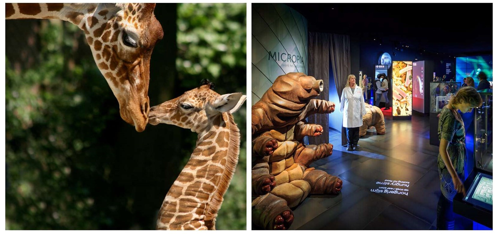 Artis Royal Zoo + Micropia