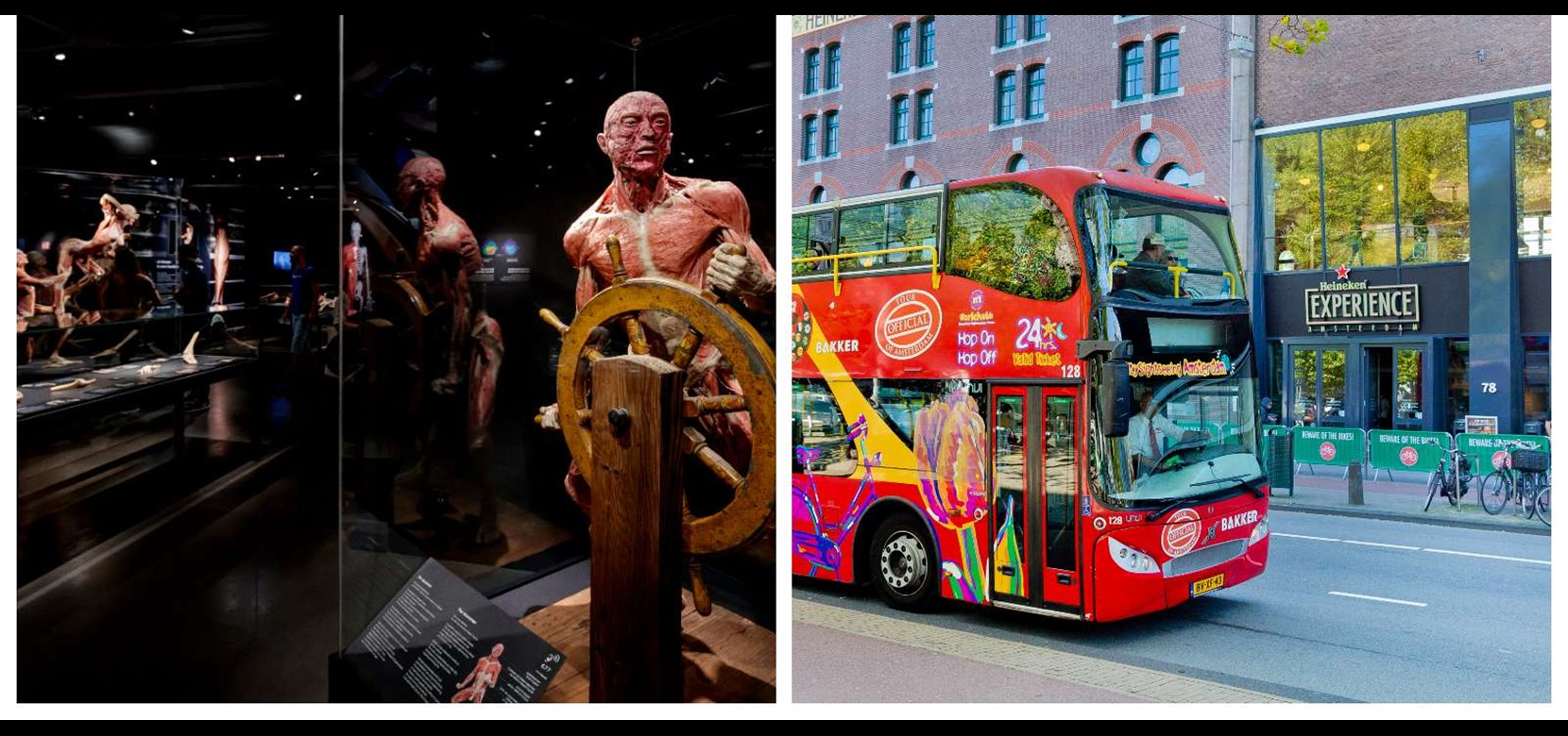 Hop on Hop off bus & boat 24 h. + BODY WORLDS