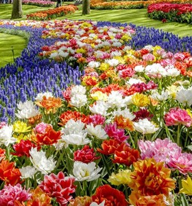 Keukenhof Small Group Tour