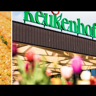 Keukenhof Gardens + Bulb Farm visit + Free 1hr Canal Cruise