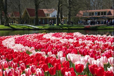everything you want to know about keukenhof gardens 2017! | tours