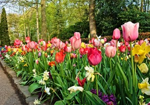 What to do at Keukenhof?