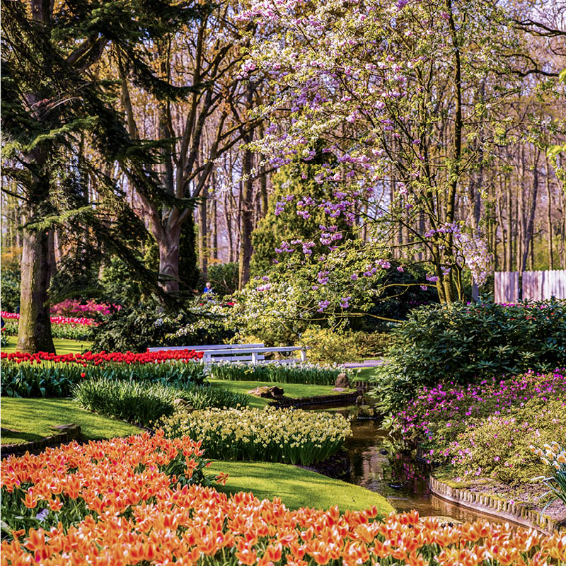 Keukenhof: skip the line ticket & free 1-hour Canal Cruise 01