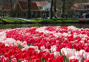 A few Keukenhof facts