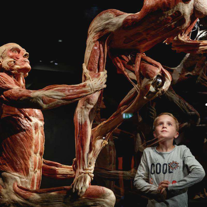 Two plastinated bodies in Body Worlds Amsterdam with a boy looking at them in awe.