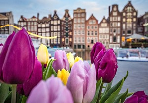 National Tulip Day celebrations in Amsterdam