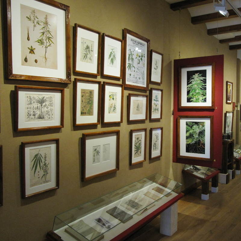 Framed drawings of hemp in the Hash Marihuana & Hemp Museum.