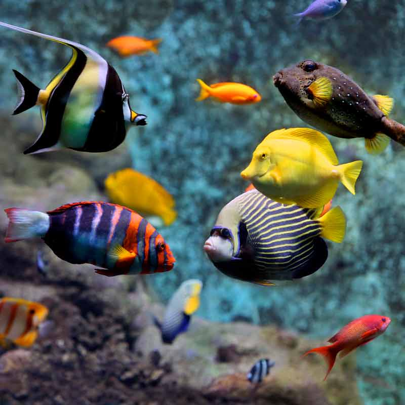 Many colorful fishes swimming in a tank at ARTIS Royal Zoo in Amsterdam.
