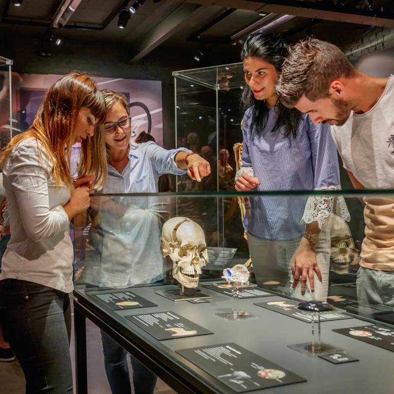 Four people looking at a skull in Body Worlds Amsterdam.